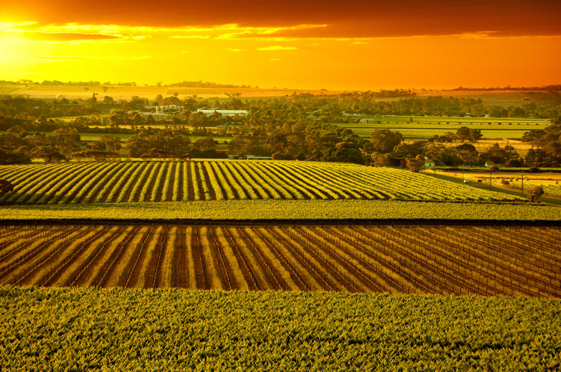 Image for Barossa Valley content section