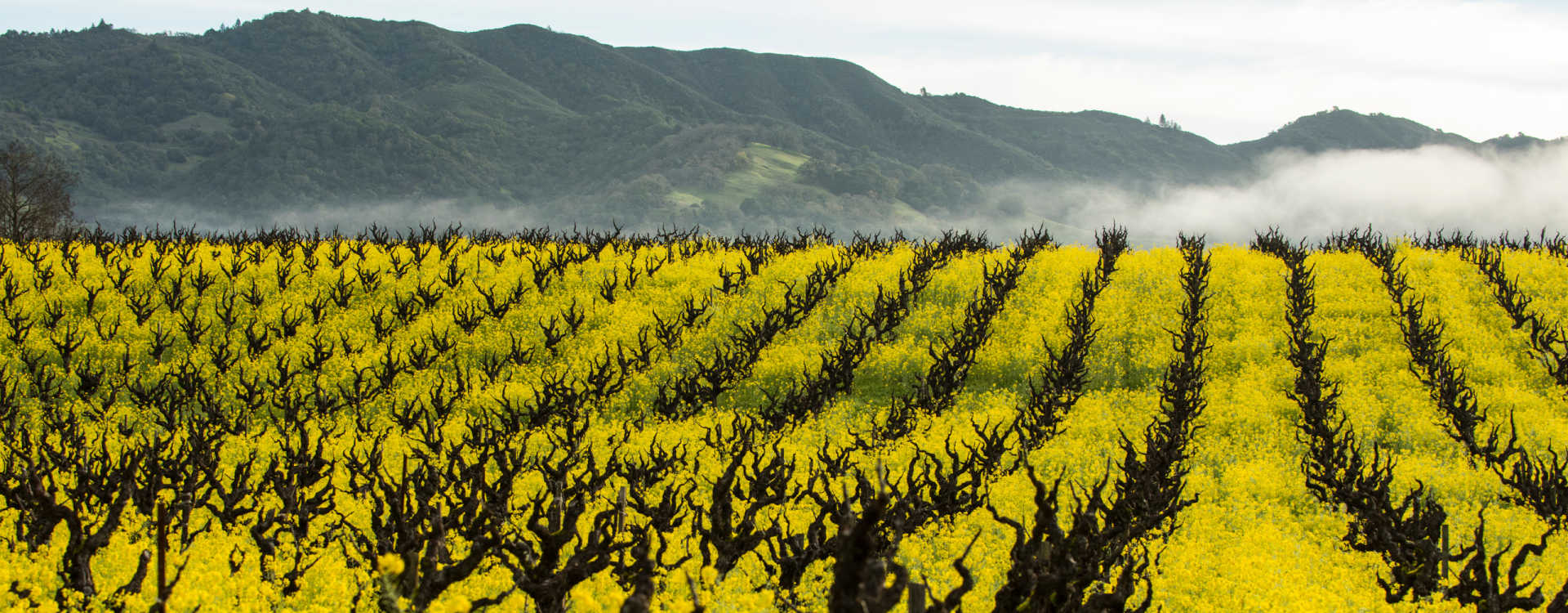 Image for California Wine U.S. content section