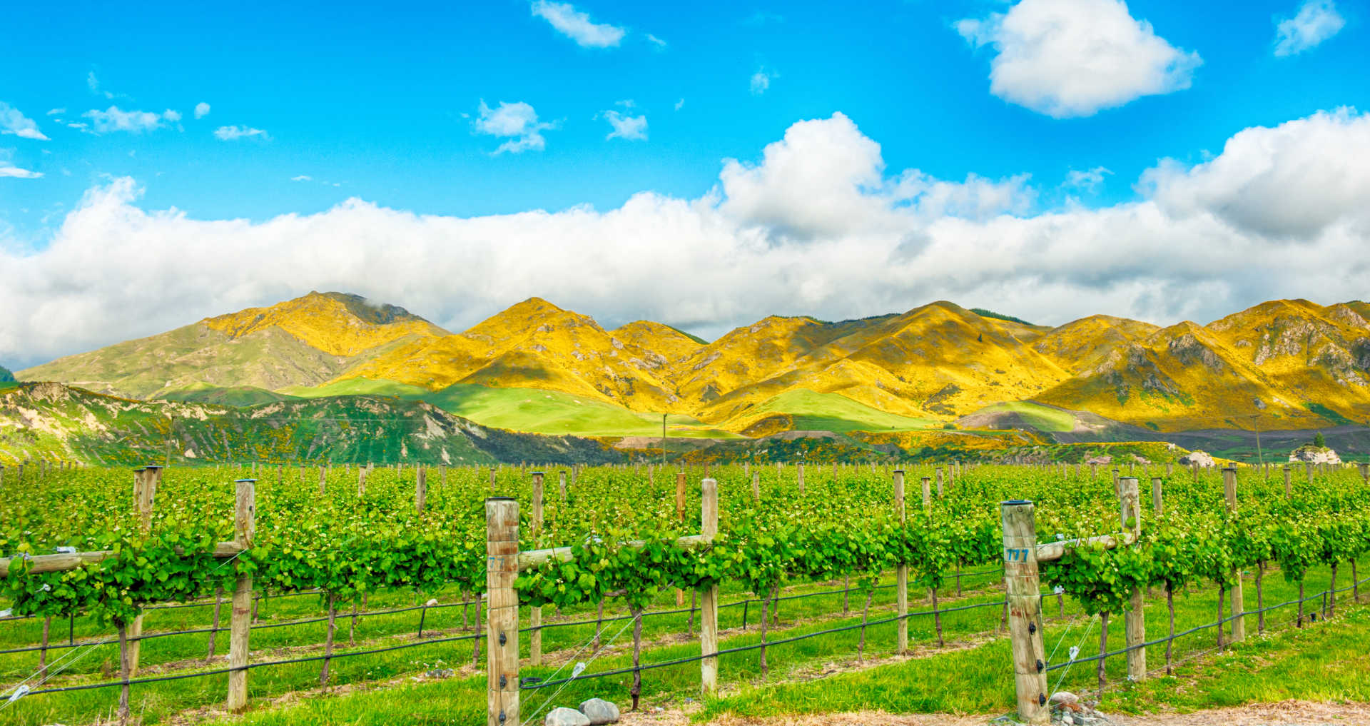 Image for Martinborough Wine New Zealand content section