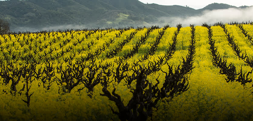 Take A Trip Through California Wines From The Golden State