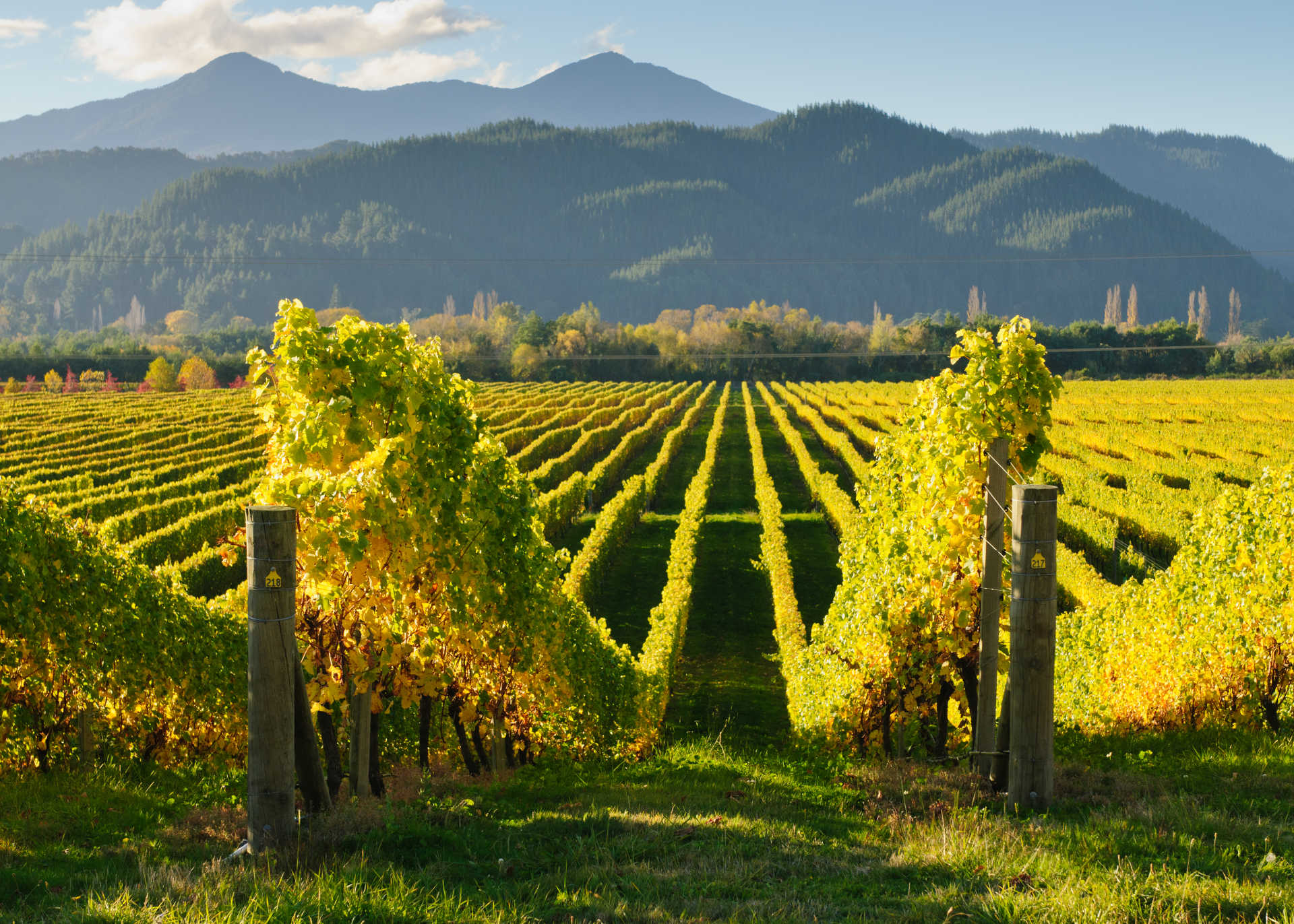 Image for Marlborough Wine New Zealand content section