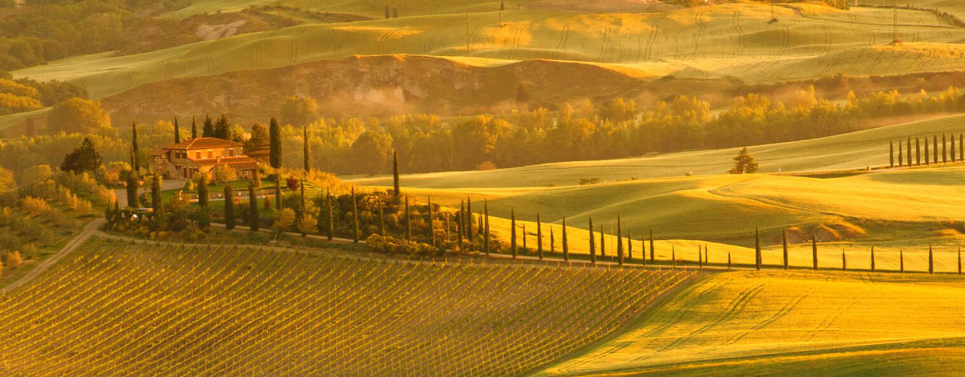 Image for Bolgheri Wine Italy content section