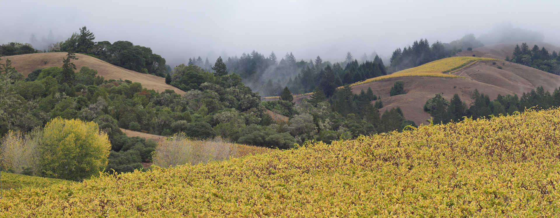 Image for Anderson Valley content section