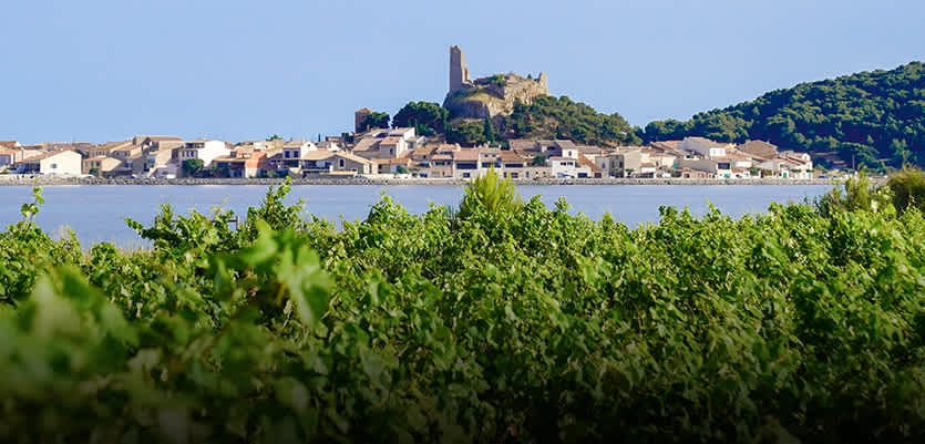Savor The Good Life Shop Wines From Languedoc