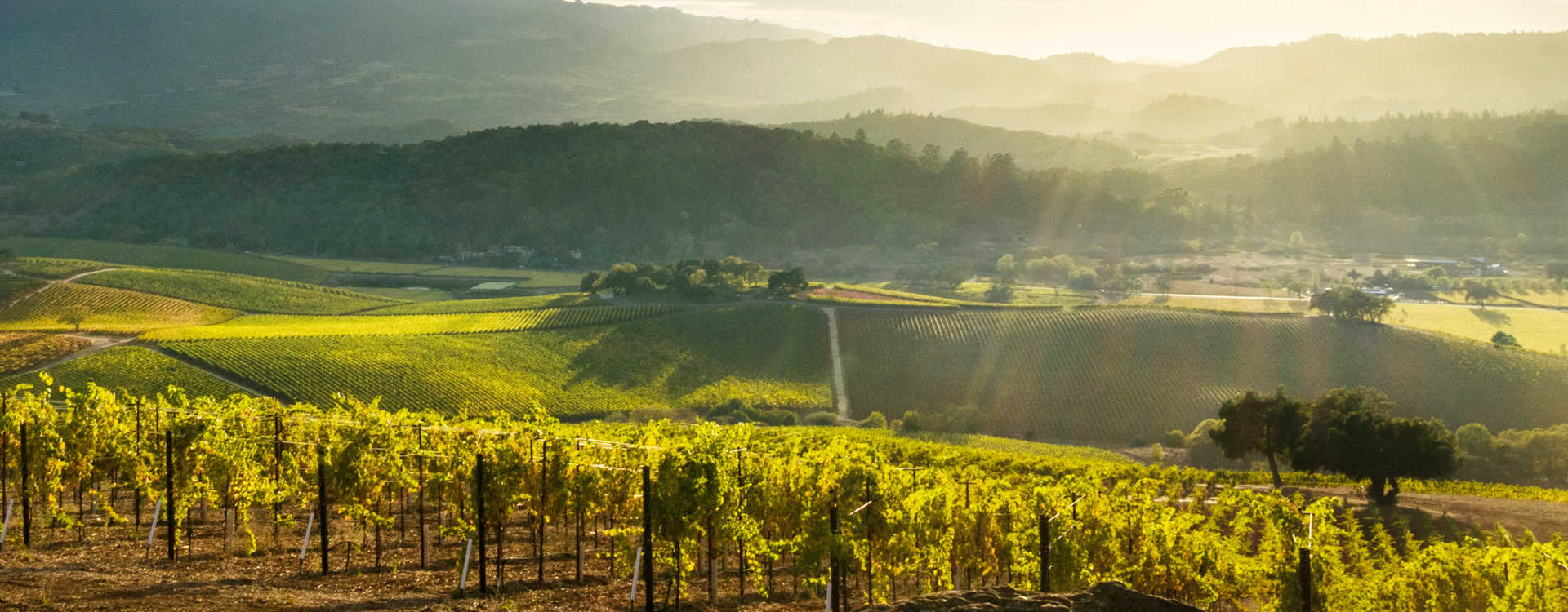 Image for Napa Valley content section