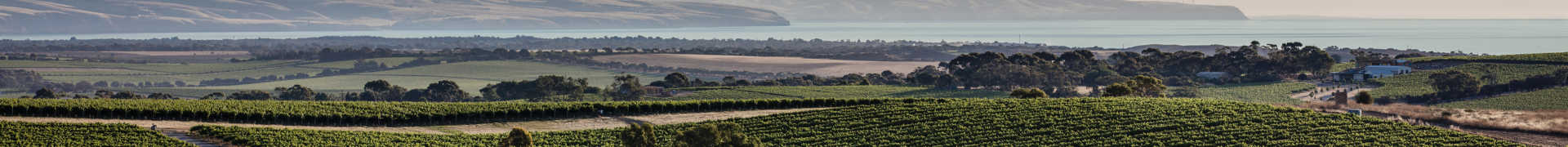 Image for South Australian Wine Australia content section