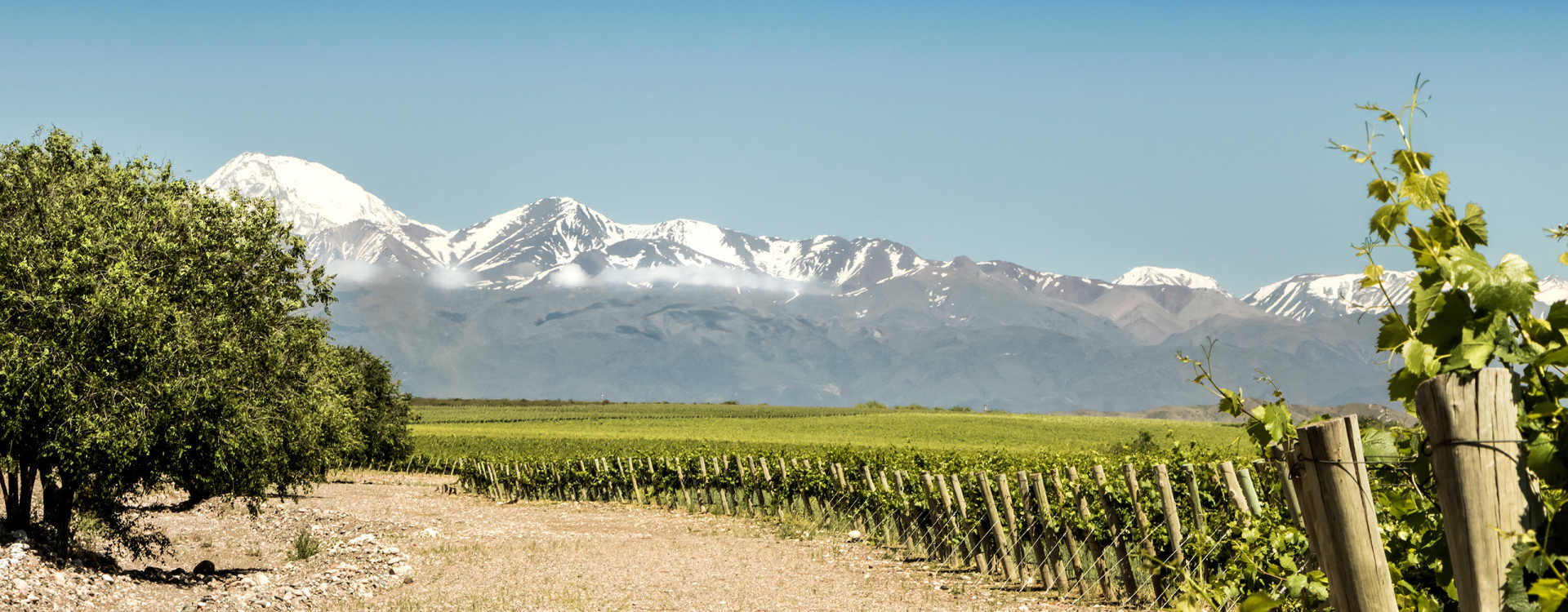 Image for Argentine Malbec content section