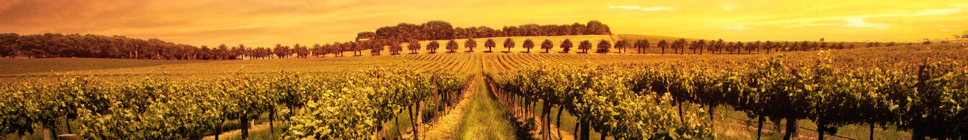 Image for Hunter Valley Wine New South Wales, Australia content section