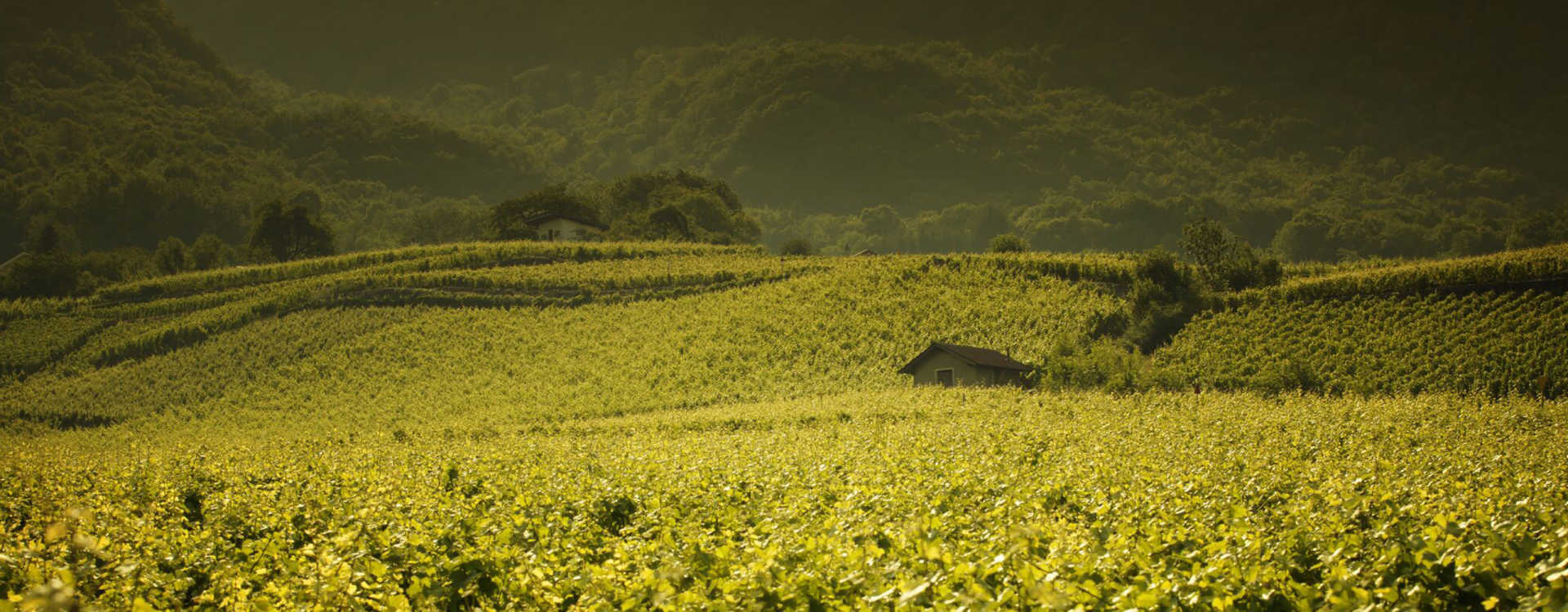 Image for Cotes de Provence Wine Provence, France content section