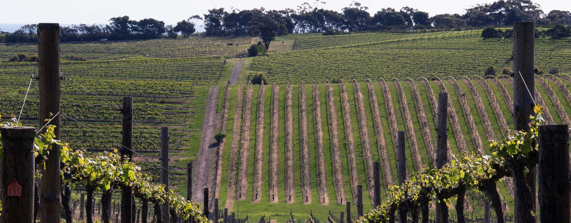 Image for Eden Valley Wine Barossa, Australia content section