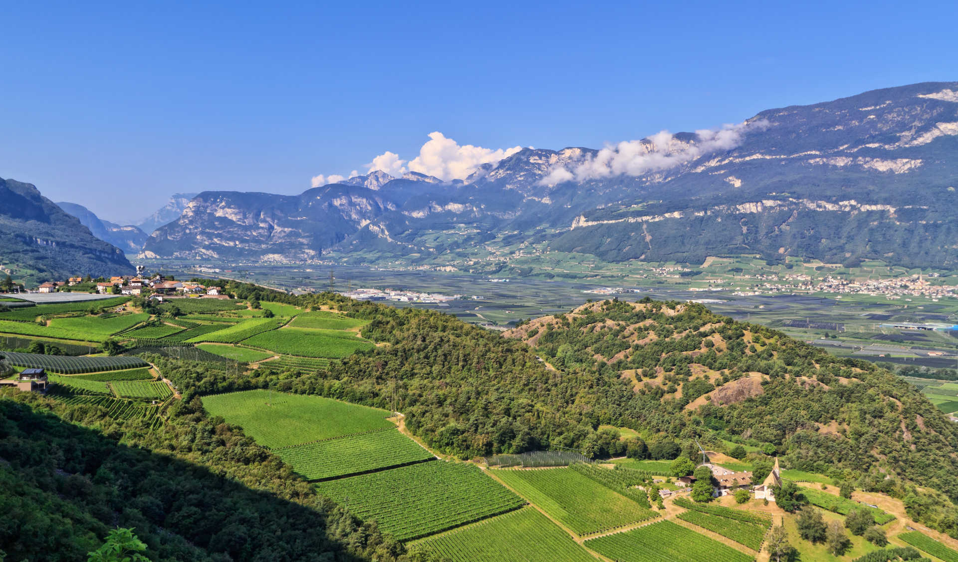 Image for Trentino-Alto Adige Wine Italy content section