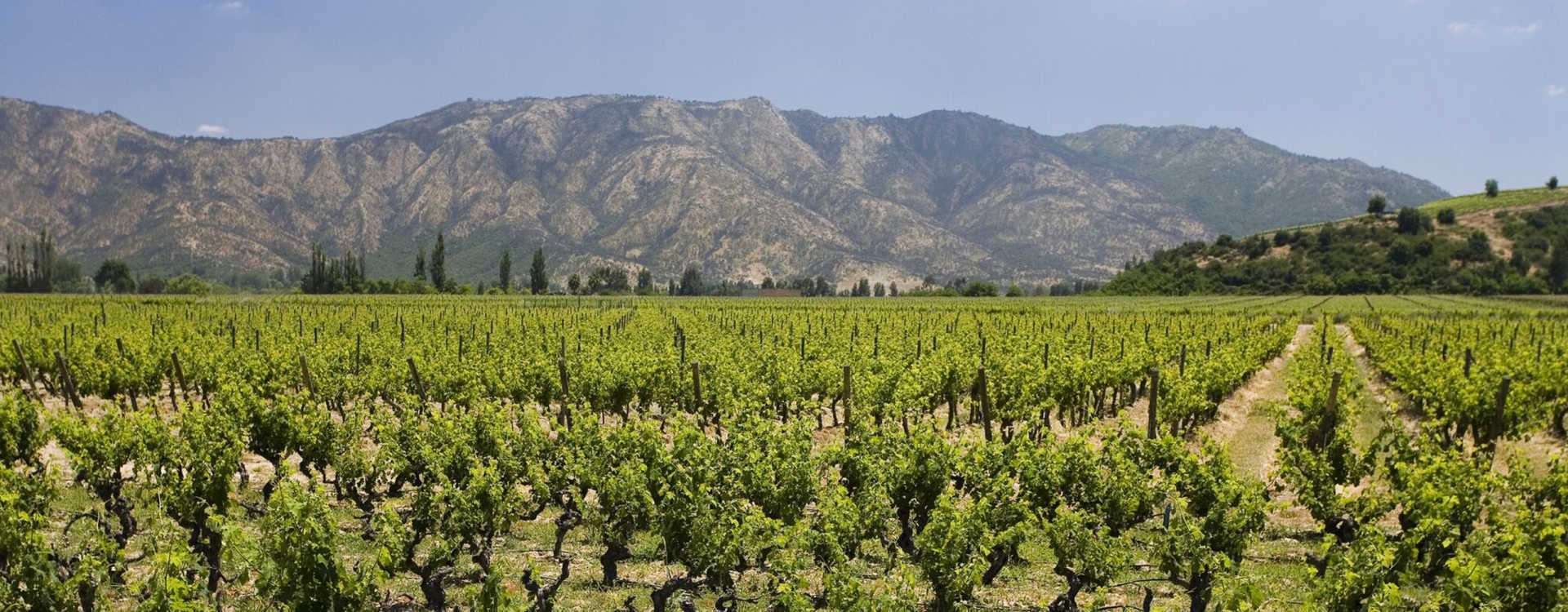 Image for Maipo Valley content section