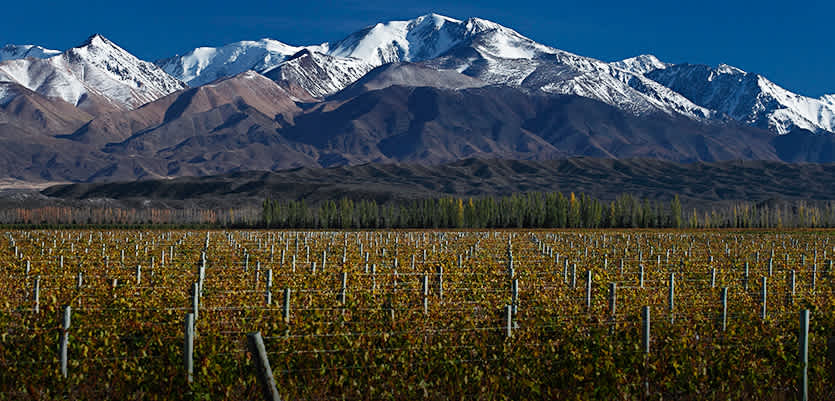 An Exciting, Delicious Adventure Discover Argentine Malbec