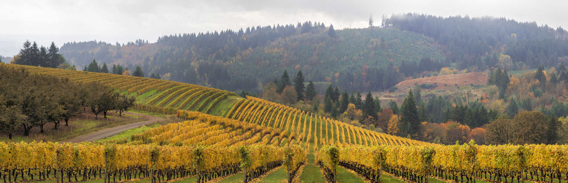 Image for Willamette Valley Wine Oregon content section