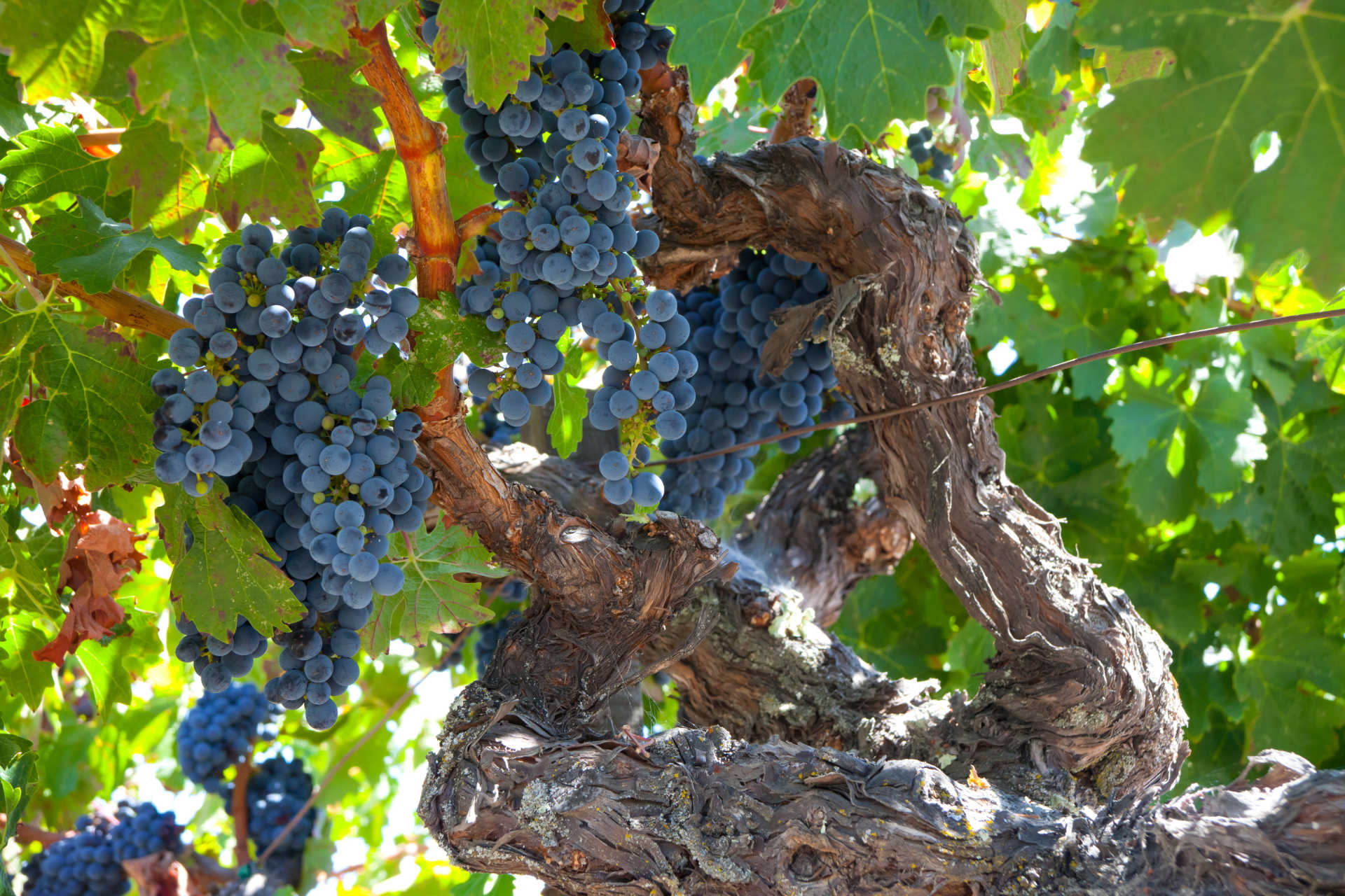 Image for Mencia content section