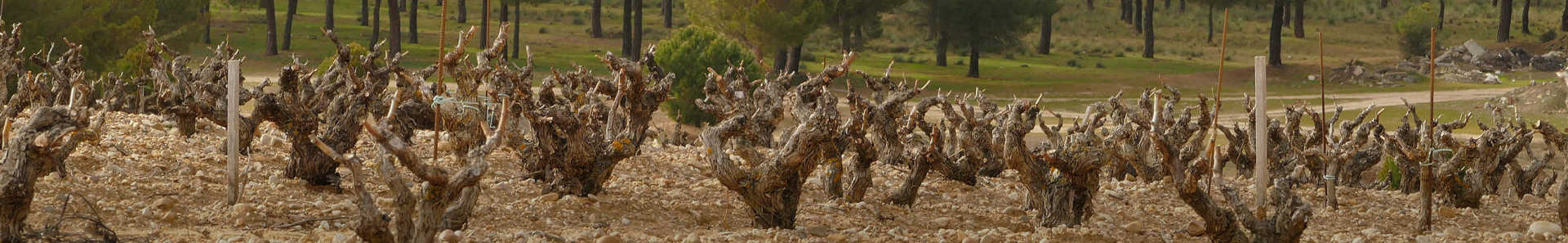 Image for Ribera del Duero Wine Spain content section