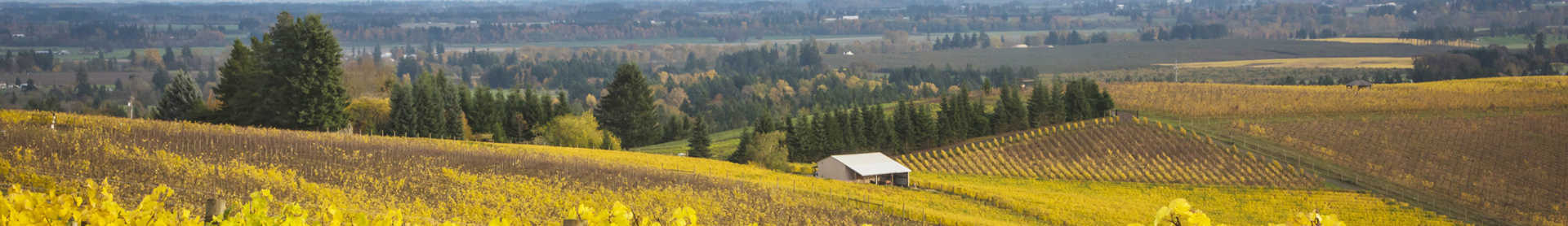 Image for Oregon Wine U.S. content section