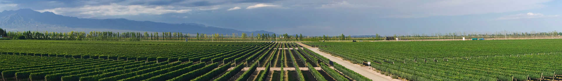 Image for Mendoza Wine Argentina content section