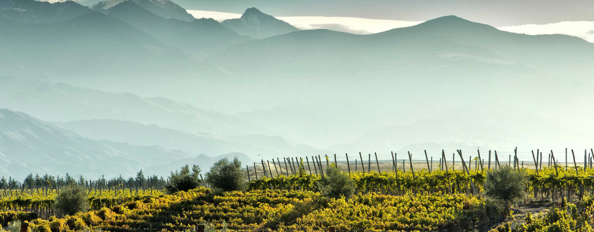 Image for Uco Valley Wine Mendoza, Argentina content section