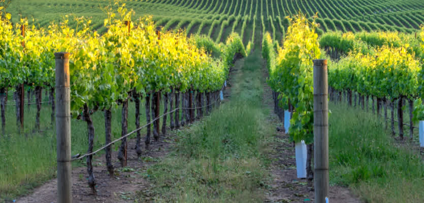 Napa Valley Values All Rated 92+ Under $50