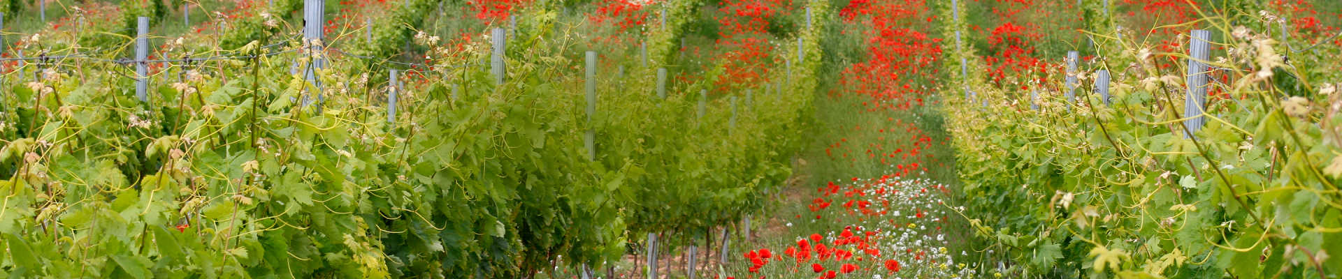 Wine Delivered<br/>Right to Your Door