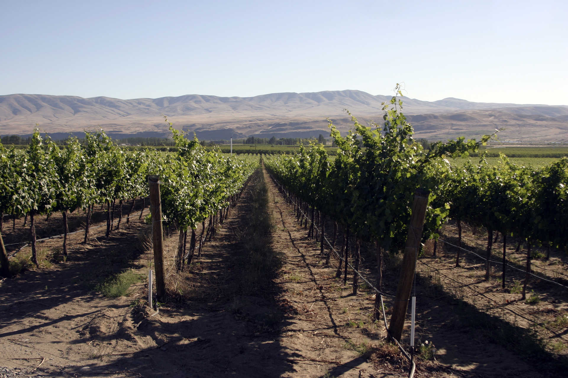 Image for Lake Chelan Wine Columbia Valley, Washington content section