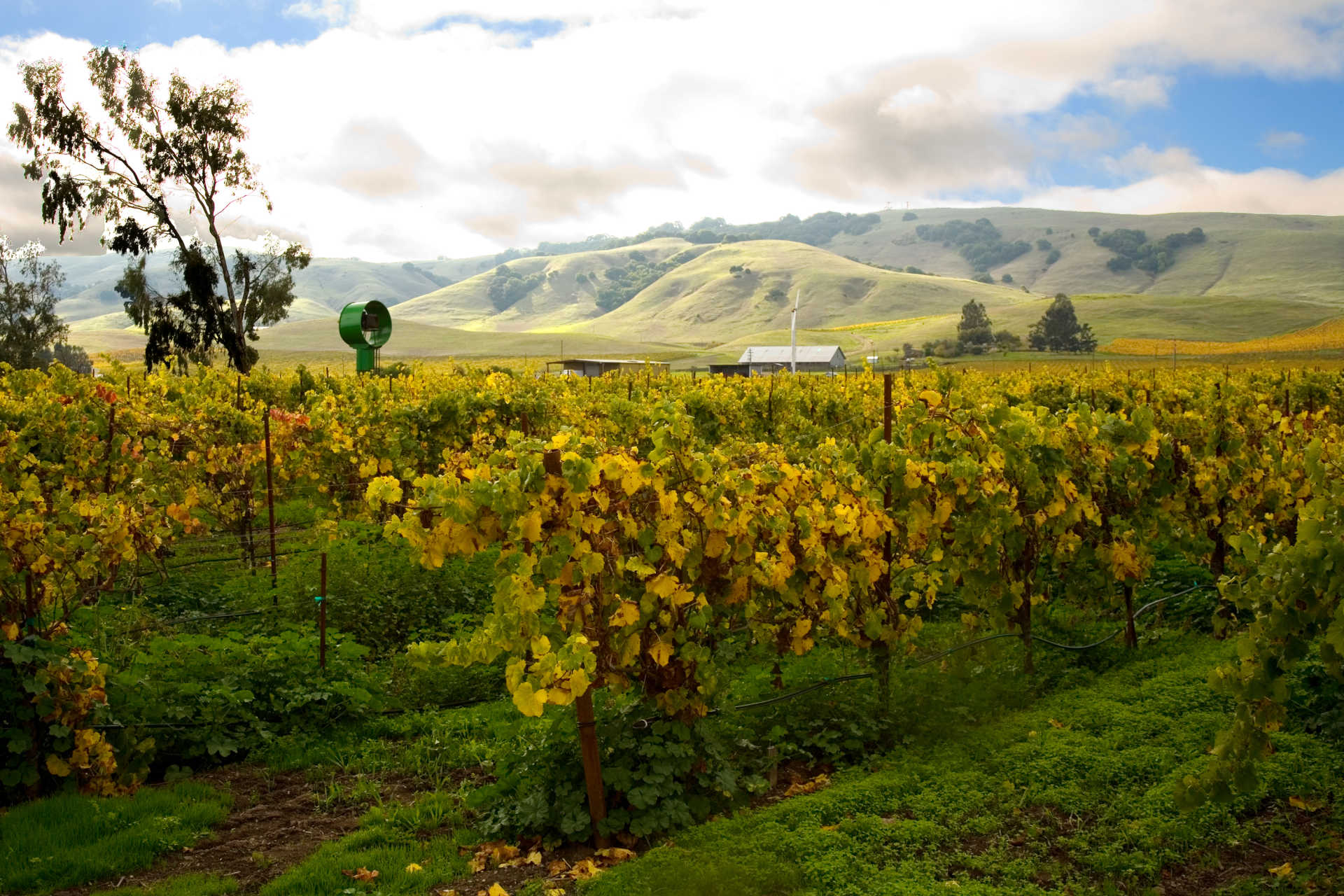 Image for Carneros content section