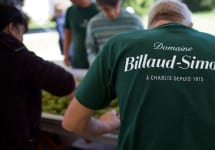 Billaud-Simon Sorting at Harvest Winery Image