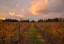 Anka Anka Vineyard  Winery Image