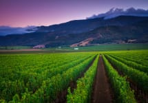 Morgan Winery Double L Vineyard & the Santa Luica Mtns Winery Image