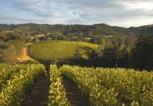 Merryvale Vineyards Schlatter Family Estate Vineyard Winery Image
