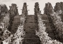 Aubert The Passion of Elegant Farming Winery Image