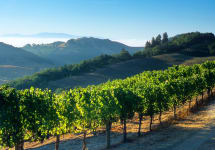 Wine Spots Napa Valley hillside vines Winery Image