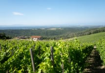 Duemani Castellina Vineyard Winery Image
