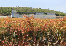Aalto Aalto Winery in Autumn Winery Image