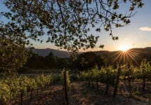 Lail Vineyards Mole Hill Cabernet Vineyard Winery Image