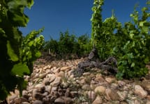 Andre Brunel Les Cailloux Vineyard Winery Image