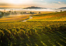 Patient Cottat Vineyards in Sancerre Winery Image