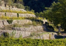 Chateau Miraval A Location with Exceptional Terroir Winery Image