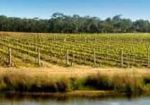 Yabby Lake Winery Image