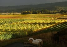 Westrey Winery Image