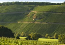 Fritz Haag Incredibly Steep Hillside of Brauneberg Winery Image