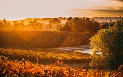Terra d'Oro Amador County Weather Winery Image