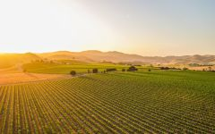 Layer Cake Sunset in the San Ardo Hames Valley Winery Image