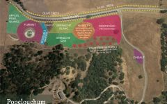 Bonny Doon Popelouchum Vineyard Map Winery Image