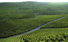 Perrier-Jouët Aerial View of Champagne Vineyards Winery Image