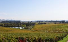 Patz & Hall Hyde Vineyard in Carneros Winery Image