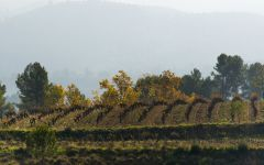 Raventos i Blanc The Estate in Autumn Winery Image