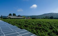Frog's Leap Solar Panel on the Estate Winery Image
