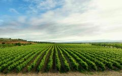 La Rioja Alta Vineyard  Winery Image